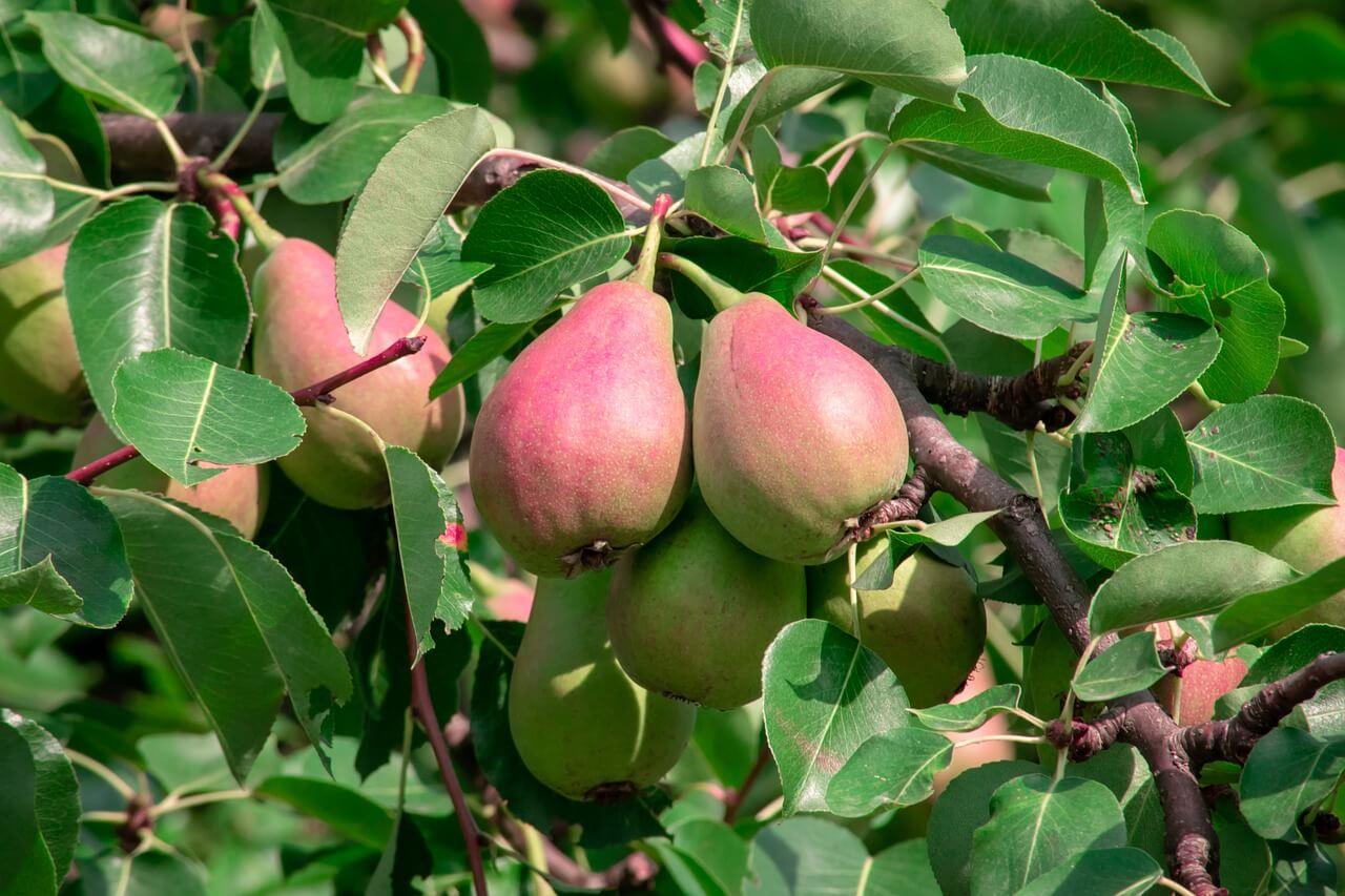 Green Rocket Crowdinvesting - ernte die Früchte Deiner Investionen